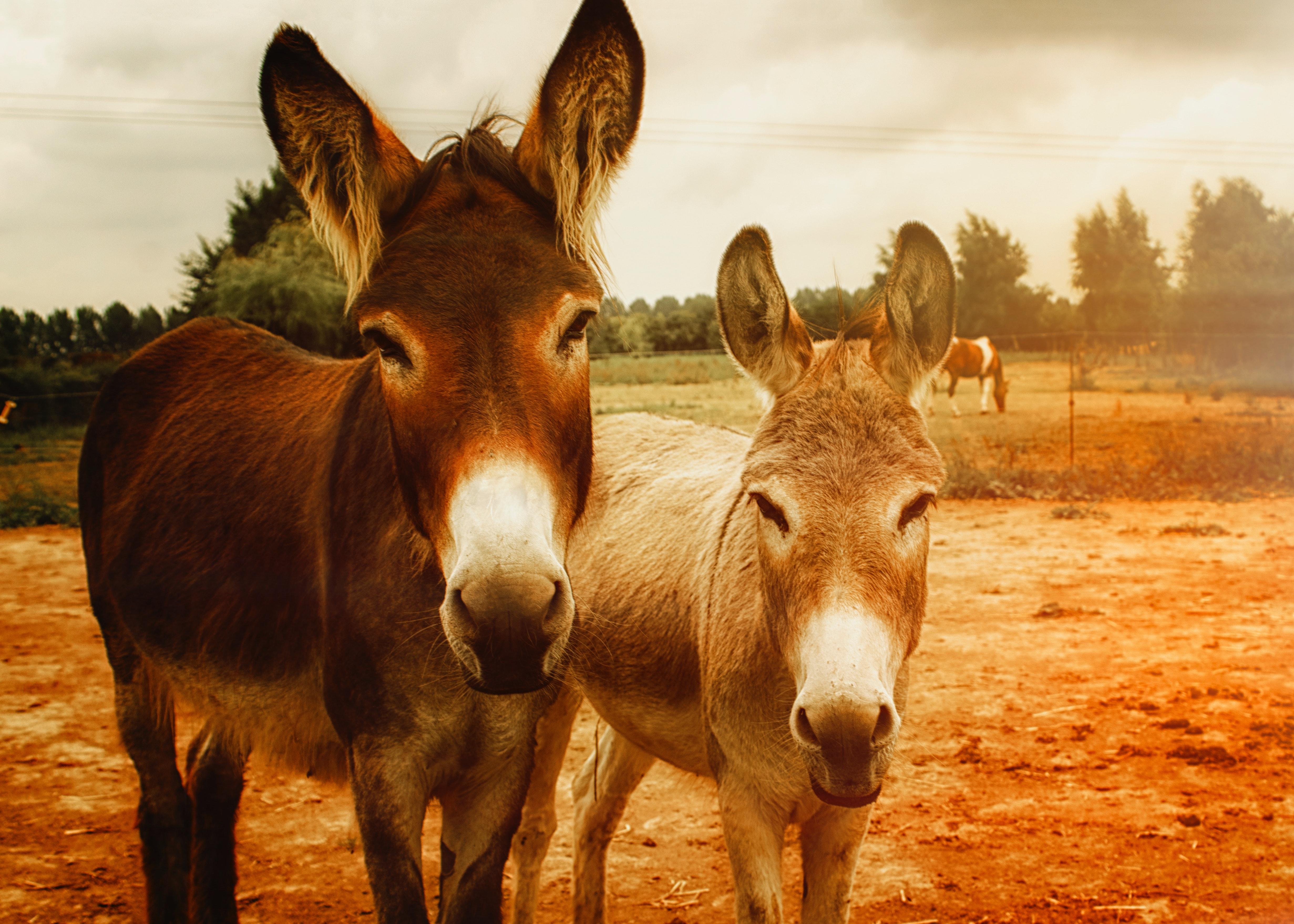 Donkey Milk !